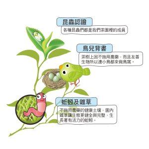 生態茶園 - 003