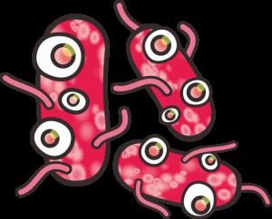 bacterium (3)