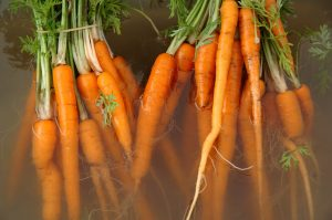 carrots-in-water-1544674