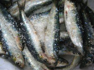fresh-salted-fish-1326889