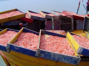 shrimp-fisherman-s-boat-at-bah-1494714